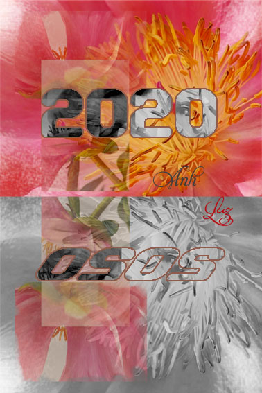 voeux 2020 Anh Luz pivoines/wishes Anh Luz for 2020
